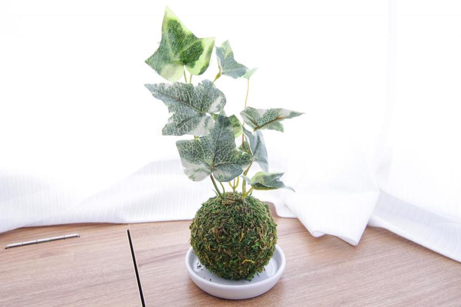 シンプルなお部屋だからこそ観葉植物の緑がアクセントに