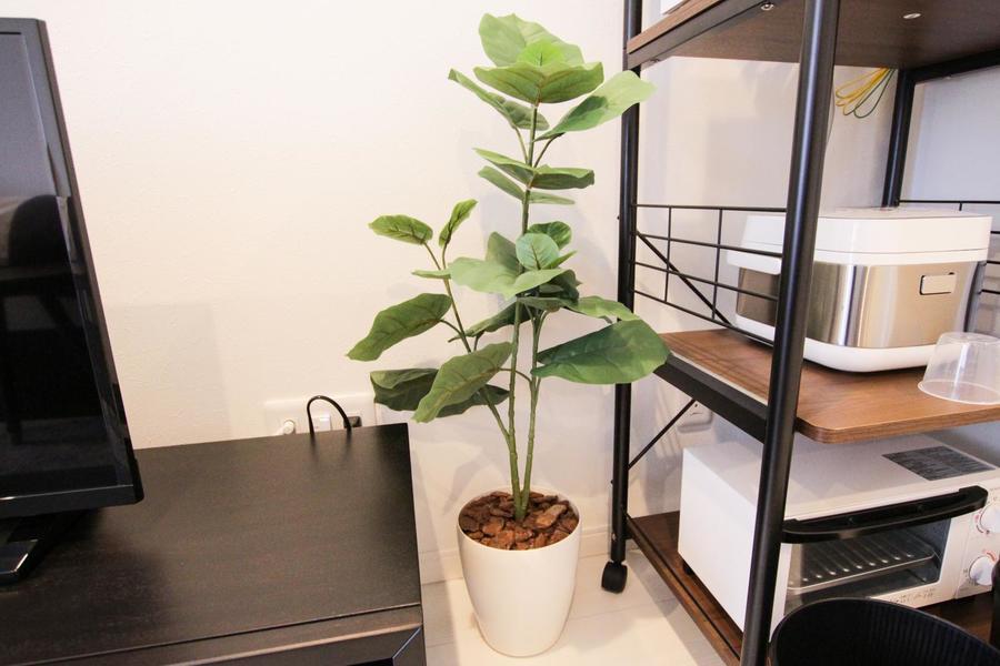 シンプルになりがちなお部屋にみずみずしさを与えてくれる植物