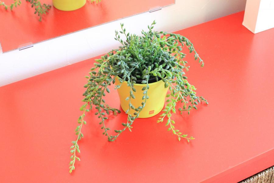 スタイリッシュな空間に安らぎを与える観葉植物